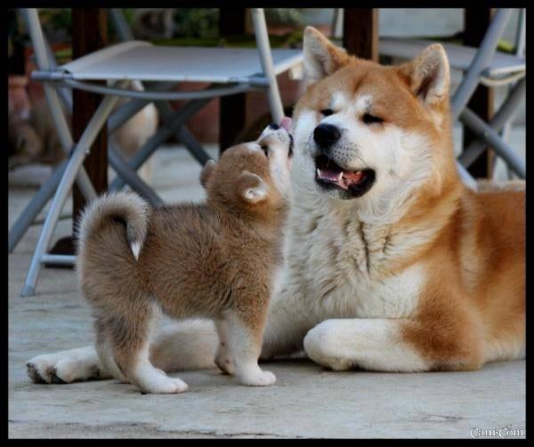 Socializziamo anche con qualche cane antipatico ti for Cani giocherelloni