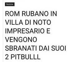 bufalapitbull_FB1