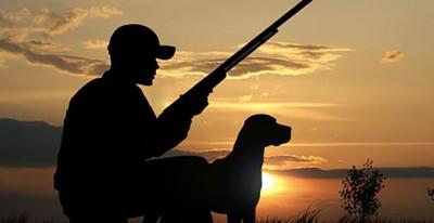 cane_cacciatore