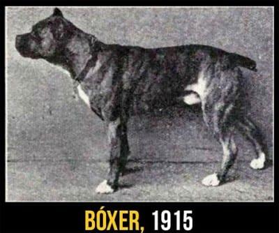 ...e questo non è un boxer.