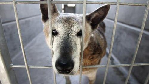 Canili che odiano i cani ti presento il cane - Portare il cane al canile ...