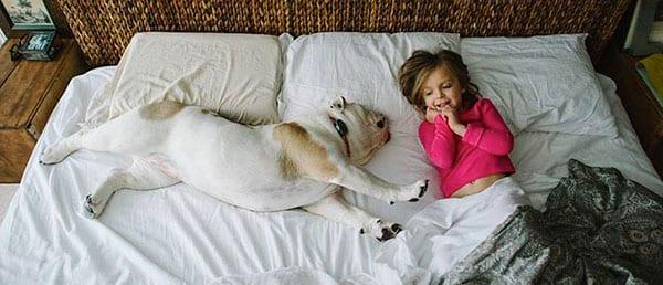 Tutto e il contrario di tutto il cane nel letto ti presento il cane - Sognare cacca nel letto ...