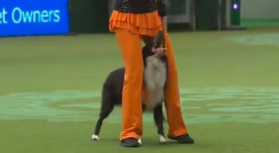 dogcrufts1