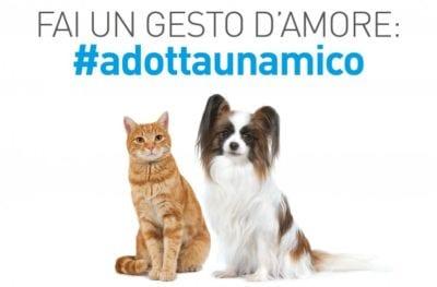 Il-mio-cane-210x285_adottaunamico-1-750x494