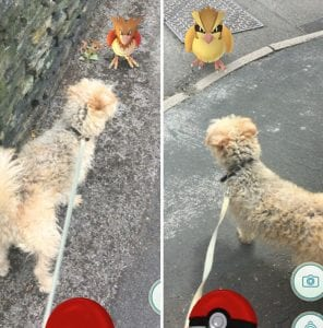 pokemon-go-dog-walking-animal-shelter-muncie-4-296x300