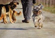 Attenzione: i cani di Green Hill non sono cani come gli