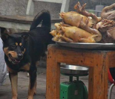 Ti Presento I Cani Pariah Del Vietnam Ti Presento Il Cane