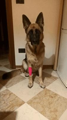 Il nostro polpo di calore ti presento il cane for Antinfiammatorio cane