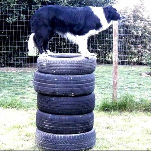 Dog Balance Ft
