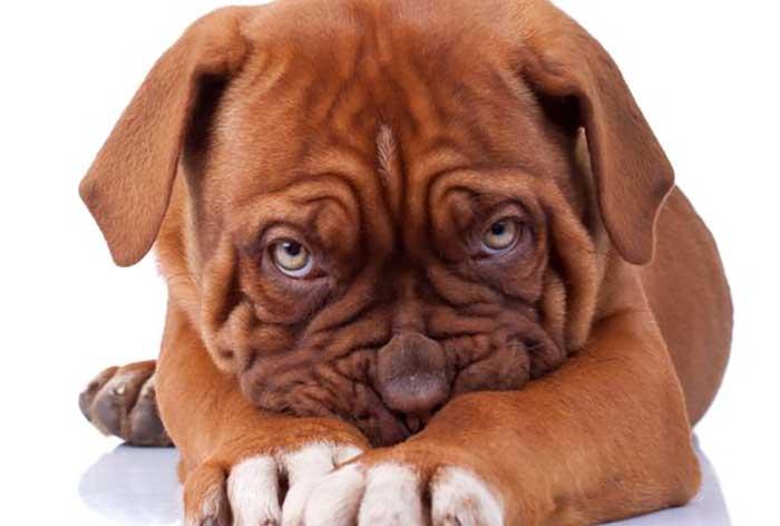 Migliorare autostima e sicurezza del cane