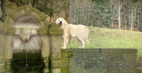 Ti presento il cane da pastore maremmano abruzzese ti for Casa progetta il trotto del cane