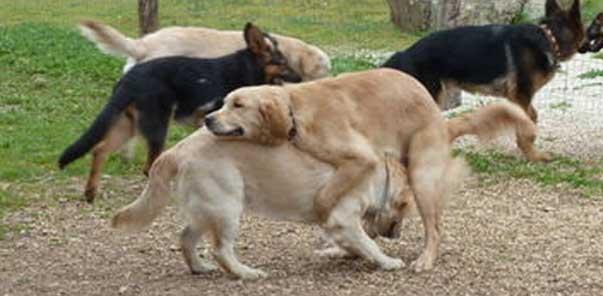 cosa vuol dire prostata ingrossata nel cane 2