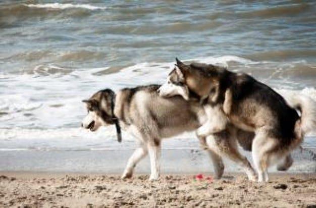 Lo Quot Stupratore Coatto Quot Ti Presento Il Cane